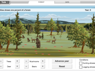 Computer model - forest ecosystem